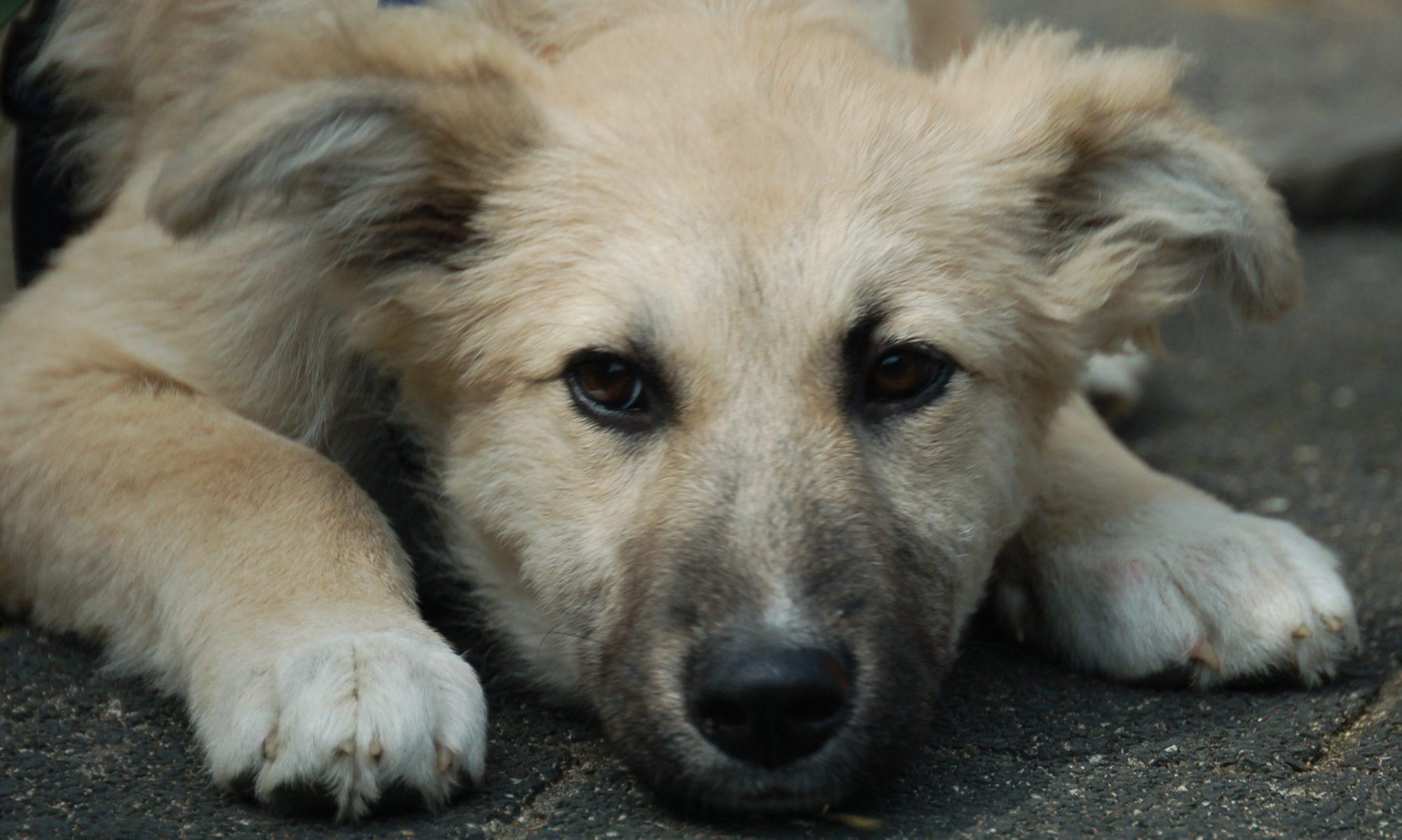 Freunde für Straßenhunde